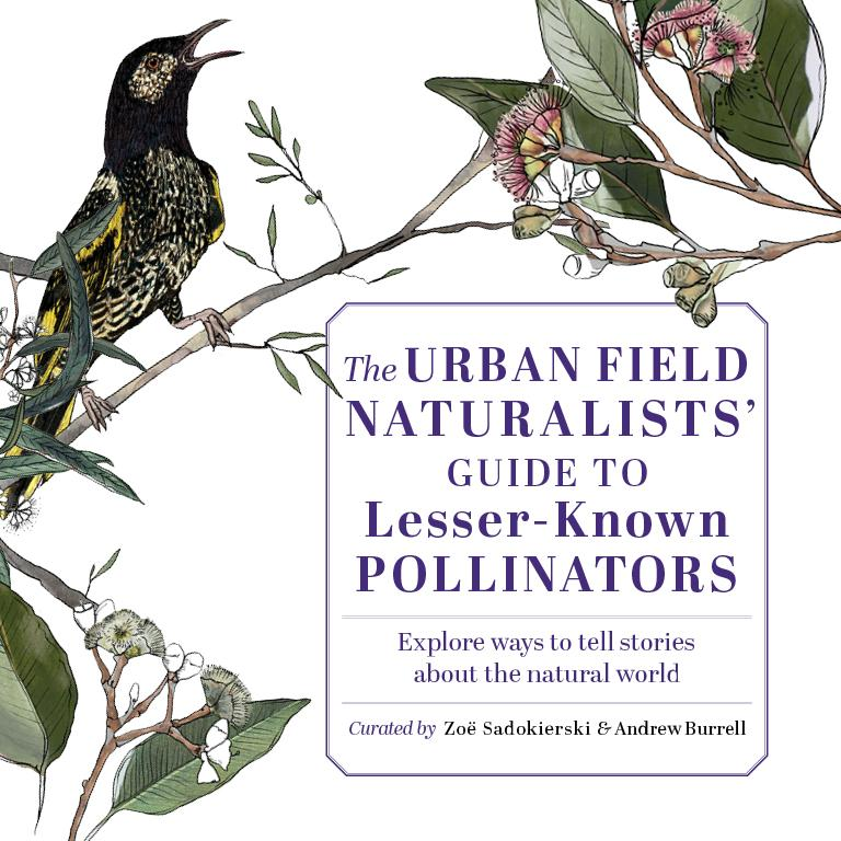 The Urban Field Naturalists' Guide to Lesser-Known Pollinators - web tile